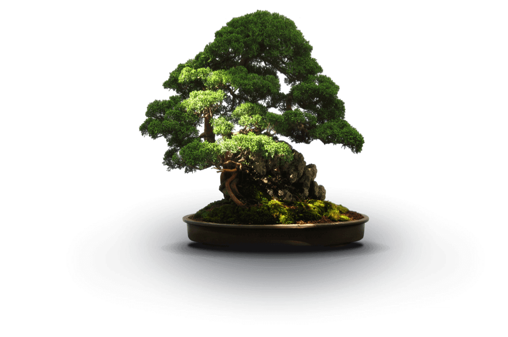 image-bonsai-2